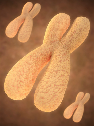Human Chromosomes more scientific illustrations follow us on Facebook