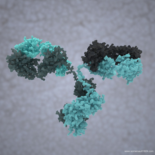 Antibody more scientific illustrations follow us on Facebook