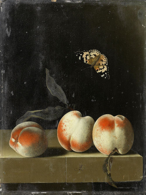 svell:  Adriaen Coorte, Three peaches on a stone ledge with a Painted Lady butterfly, 1693-95.