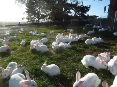 nova-luna:  hitmonchan:  welcometobabyland:  All these beautiful bunnies (around 300) were rescued today (legally) from a rabbit farm. The rabbit farm was shut down for good. The cages are all going to be destroyed so no-one else can use them again. The bunnies are all staying at Big Ears Sanctuary in Tasmania.   Omg