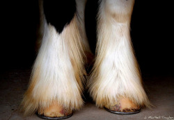 Horse Feathers on Flickr.