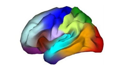 "Genetic Atlas Yields A Brainbow Of Information Scientists have created the first genetic ""atlas"" of the human brain, and the result is a very pretty Skittles-esque map of the brain as a rainbow. A brainbow."