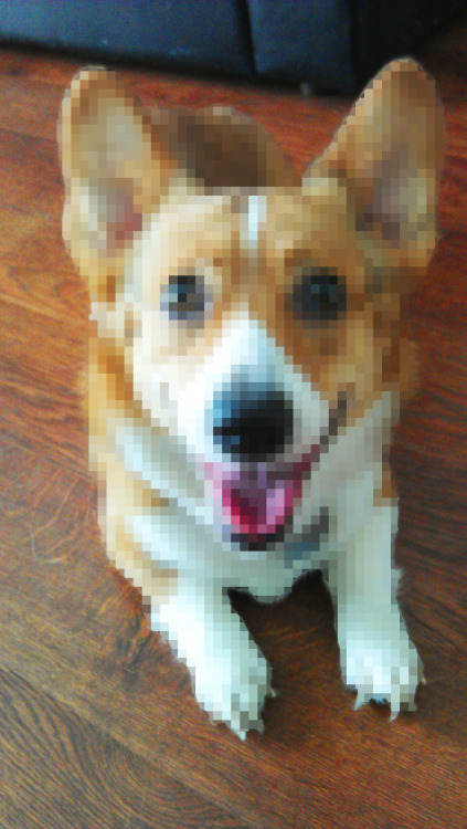 Tyson, the 8-bit corgi! lol…