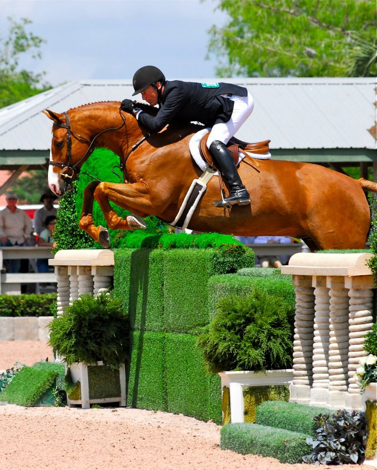 turnontheforehand:  In love with this horse