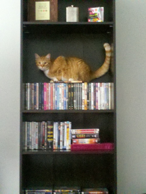 get off there cat. you are not a movie nor a book. you are entertaining but do nothing to contribute to my intellectual maturity.  please consider donating $5 to the indy mutt strut here: http://register.indymuttstrut.org/goto/getoutoftherecat