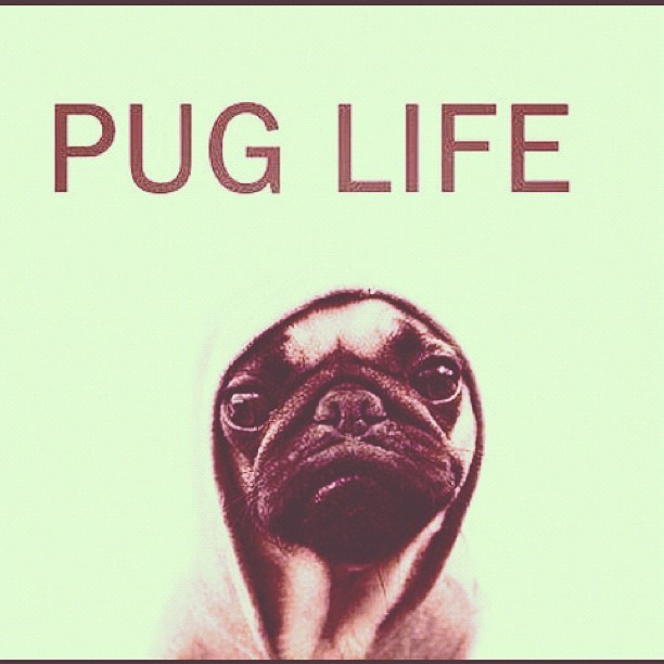 Pug Life #justink (Taken with instagram)