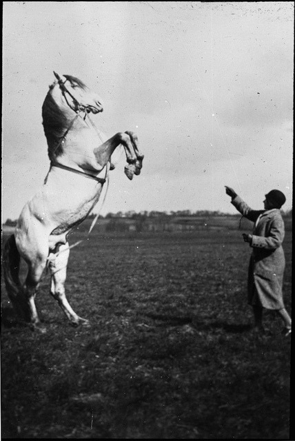 Standing horse by Tyne & Wear Archives & Museums on Flickr.Look at the photo. Consider what has has just happened here, or what is about to happen here. Who has been here? Who will come here and and what will they do? What kinds of interactions can you imagine? Write one leaf about these or other things that occur to you upon looking at the picture. Do not allow yourself to be limited by what you see. Go.| Write One Leaf + about + ask + random + facebook + twitter | sponsors + You Are a Dog [ Kindle | Google | iBookstore ]