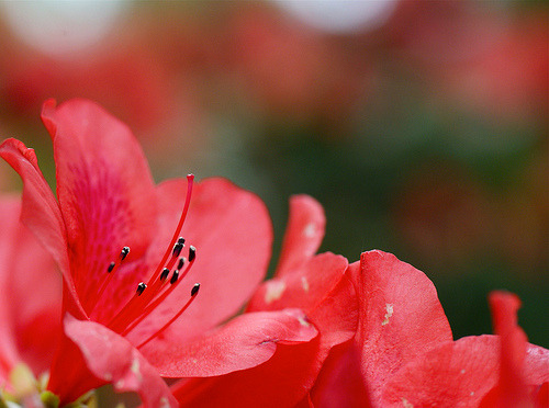 Azalea~Explored! (by j man ツ)