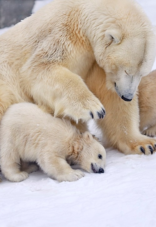 "earth-song:  under Mother protection"" by sergei gladyshev  It's Monday."