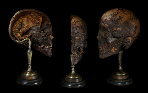ryanmatthewcohn:  Mummified Human Head. Mounted by Ryan Matthew. Photo by Sergio Royzen.