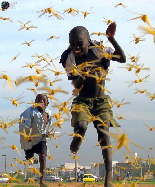 Senegalese children run as locusts spread into the capital Dakar September 1, 2004. Source: Reuters.