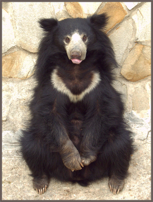 What a pretty Bear :) lobotomic
