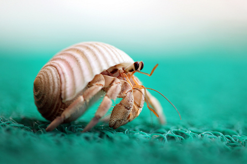 I love my hermit crab, Nelson. He looks similar to this little guy above. He's been through a lot but he's definitely a trooper :)