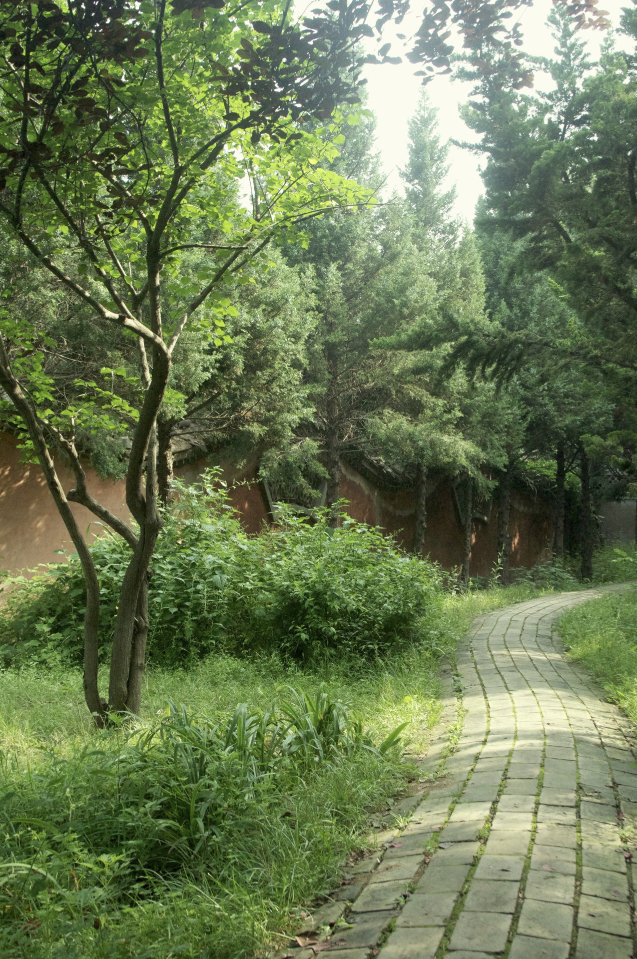 Winding Path, Nanguo Temple, Tianshui, Gansu.
