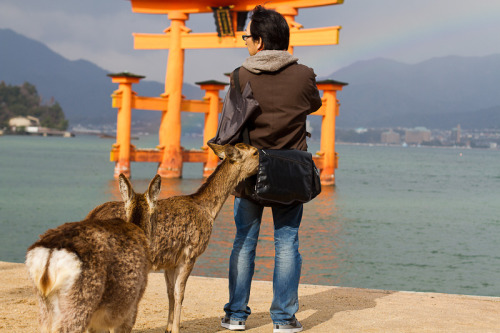 Animals&Tourists  March 24th, 2012 on Miyajima Island