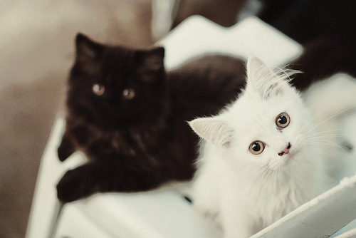 stellarsspirit:  Murphy and Polly (by pltw)