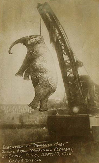 nprfreshair:  On September 13, 1916, a five ton elephant nicknamed Murderous Mary was hanged in East Tennessee. (h/t babesofnpr) (via Phantasmagoria Photography: The Tragic Story of Murderous Mary, Erwin, Tennessee)  Are there any songs about Murderous Mary? There should be at least 6.