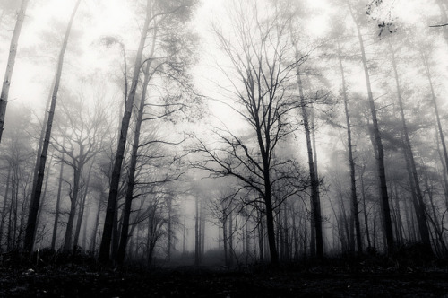foggy forest by malcypants on Flickr.