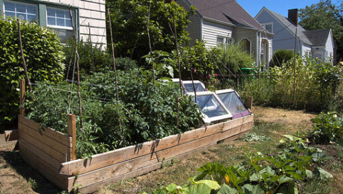How to start a vegetable gardenWe've got seven tips for how to begin planting and ensure a successful garden bounty this year.