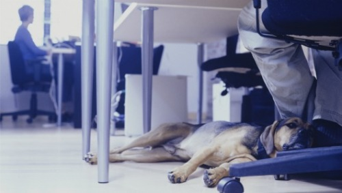 mothernaturenetwork:  How dogs can have a positive impact on the workplaceDogs being in the office reduced stress and increased cooperation among employees.  DAMN RIGHT. If everyone could bring their dogs to work the world would be a better place.