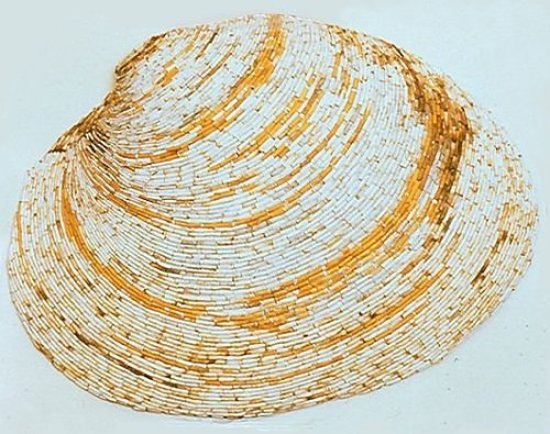 Clam Shell made of discarded cigarettes found on a beach Tom Deininger