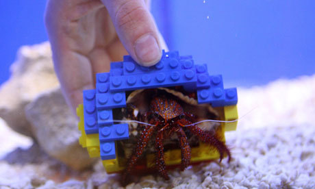 "Crab moves into Lego shell:  A new home may be hard to afford in these times of austerity, but one lucky crab has landed a multicoloured pad made especially for him. Harry the hermit crab, who lives in the rock pool in the Atlantis Discovery Area at Legoland in Windsor, Berkshire, has a shell made entirely ofLego bricks. Hermit crabs do not have their own shells so normally protect their soft bodies by salvaging empty sea shells and moving into them. Harry showed more discerning taste when he chose a shell made out of the blue, red and yellow bricks over the more traditional options. Legoland's Liane Riley said: ""We decided to give Harry a wider choice and the model makers here created a special Lego house just for him. ""We weren't really sure if he'd actually move in, but he rejected the sea and snail shells on offer and seems very comfortable in his new home""."