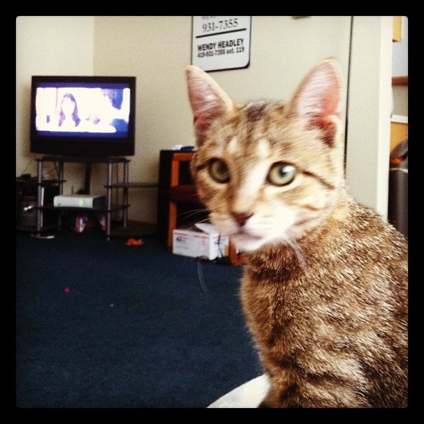 Jack and I watching 500 Days of Summer. (Taken with instagram)