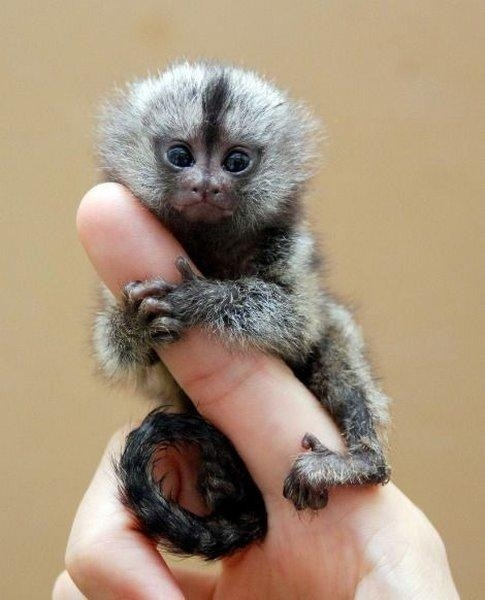 15 Tiny Cute Animals