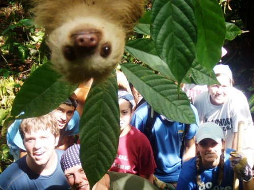 "magicalnaturereblogs:  earth-song:  A sloth has photobombed a holiday picture in the jungle. A team on an International Student Volunteers expedition had gathered in Costa Rica to help cut paths in the woodland. After completing their work, they posed for a photograph, only to be gatecrashed by the inquisitive creature. Manuel Ramirez, 44, anthropologist and tour guide, said: ""As I looked through the camera lens I could see something creeping in to the frame. When I realised it was a baby sloth I clicked the button as fast as I could, not that he was going anywhere fast ""Picture: Caters News Agency  This is so cute! :)"