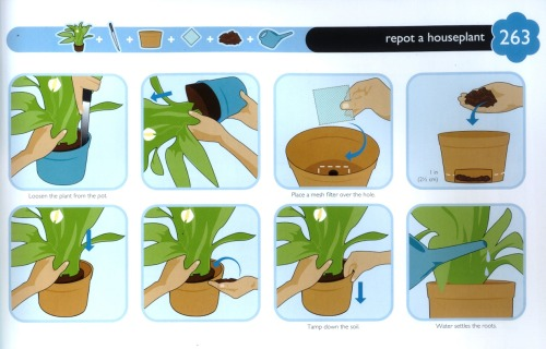 How to: Repot a Houseplant
