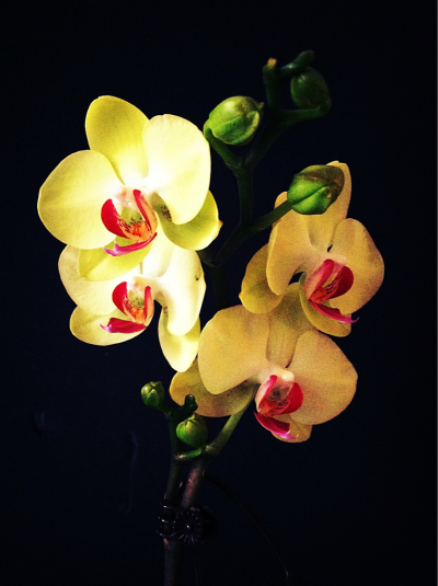New orchids.  #iphoneography #kscottphotos