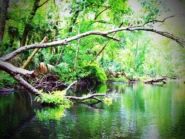 A photo I took at Rock Springs Reserve in Florida while canoeing! © Melting Blot