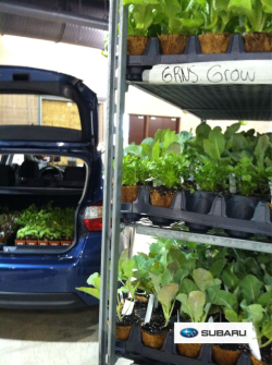 I'm thinking we could fit most of these plants in the back of the Subaru ! #pf3 With @subaru_life