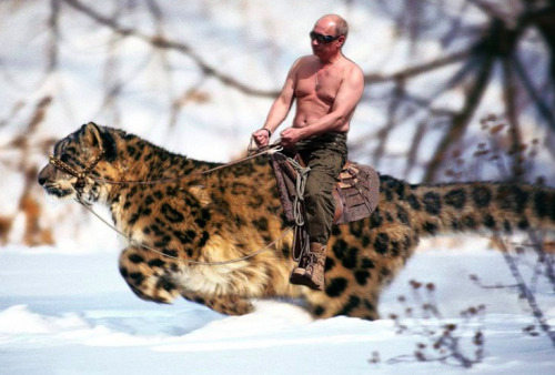 Oldie but goodie! Vlaidimir Vladimirovich visiting with his snow leopard friend last year.
