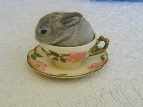 llbwwb:  Alice, it's time for tea, via:cutestuff. For the Bunny Lovers :)