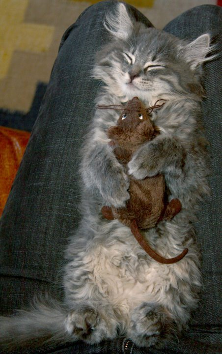 animalswithstuffedanimals:  Cuddly naptime. via reddit