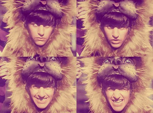 Cute Lion Ringo <3