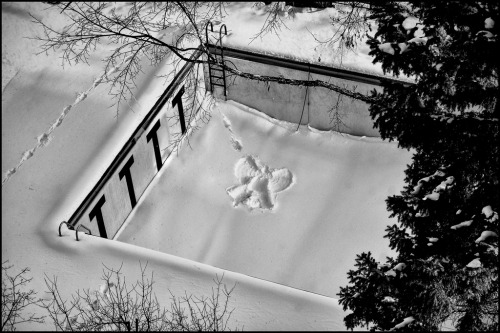 snow angel of saint paul Dan Anderson