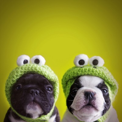 These sweet little bulldogs can not live without their crocheted frog hats!   Found via Cute n Tiny