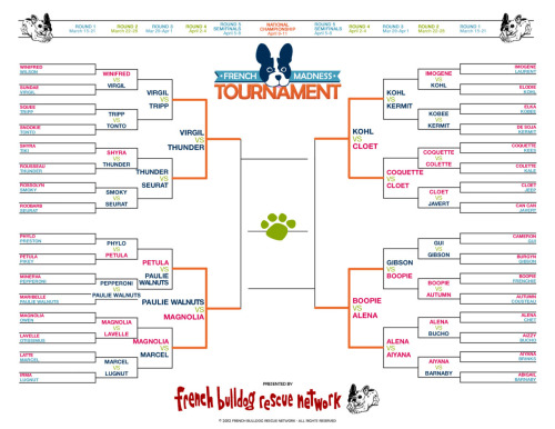 Suffering from bracket withdrawal?  Over at French Bulldog Rescue the brackets aren't over yet.  You can vote for your favorite Frenchie and help them raise some money.