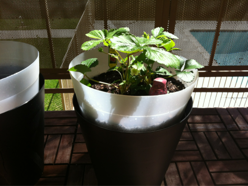 Next up: DIY Self Watering Planters… Not made from Home Depot buckets.