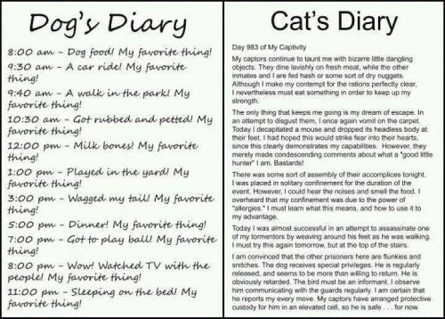 A bit of ableism in the cat's final paragraph, but very funny!