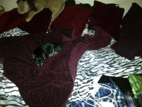 My dogs are bed hogs…