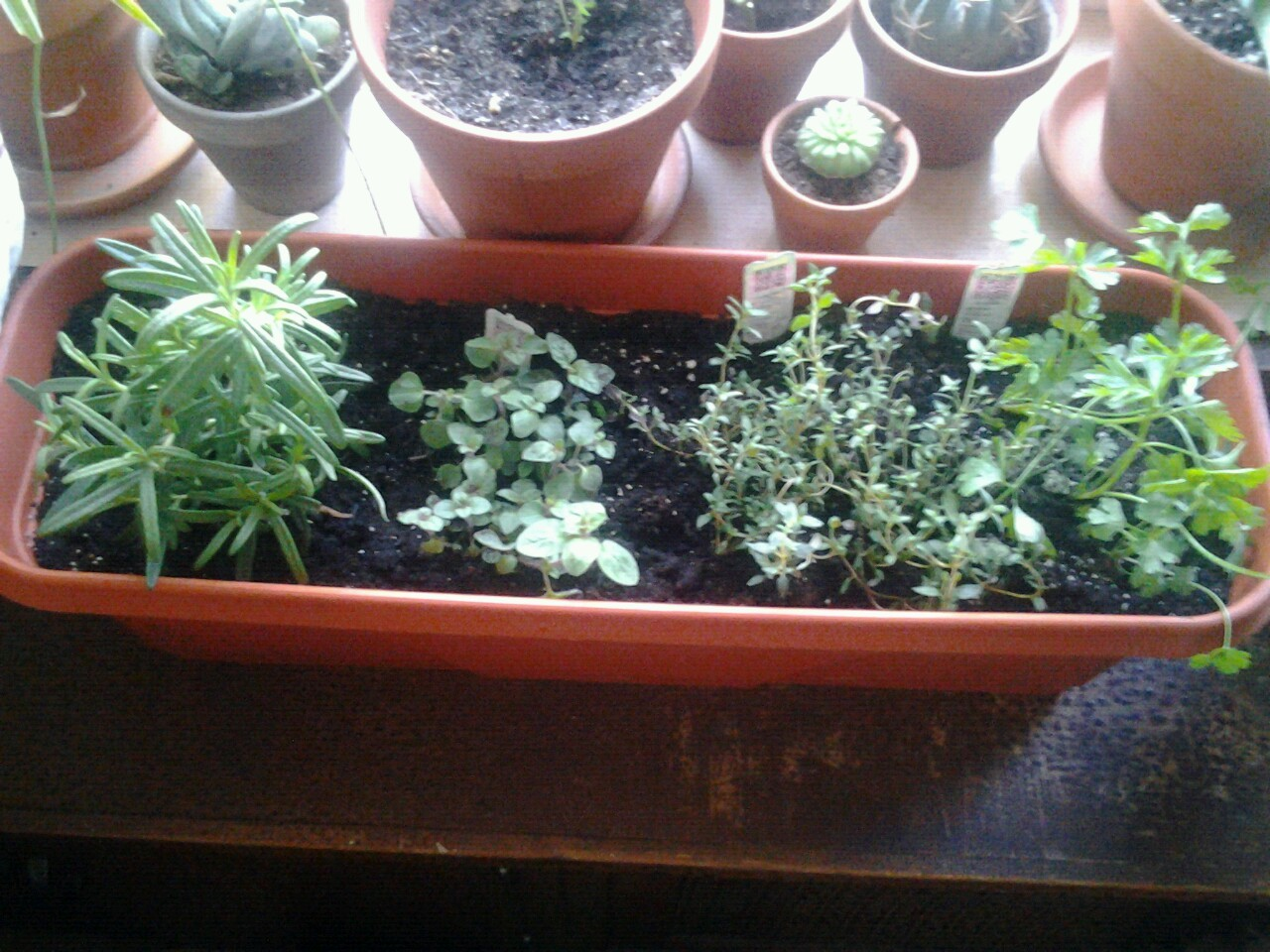 Herb garden (taken with cell phone)