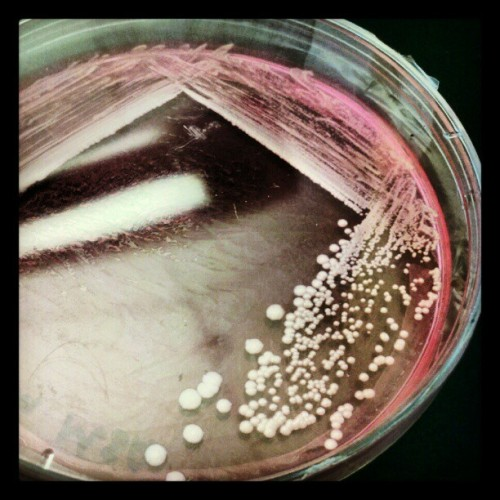 My first Instagram!!!!! In Microbiology lab. (Taken with Instagram at Science and Technology Center)