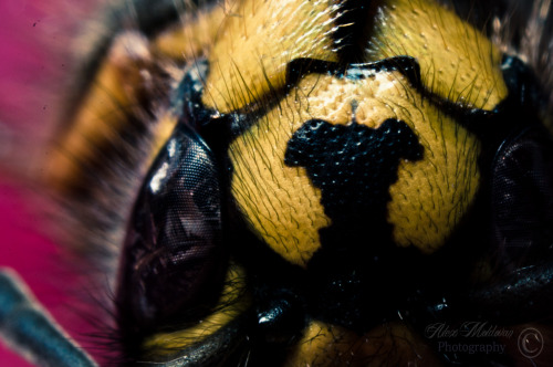 Eye to eye with a wasp. © Alex Moldovan Photography