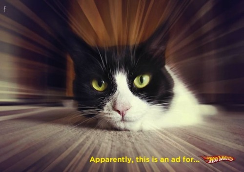 Catvertising. Ten Print Ads From Around The World Featuring Cute Cats