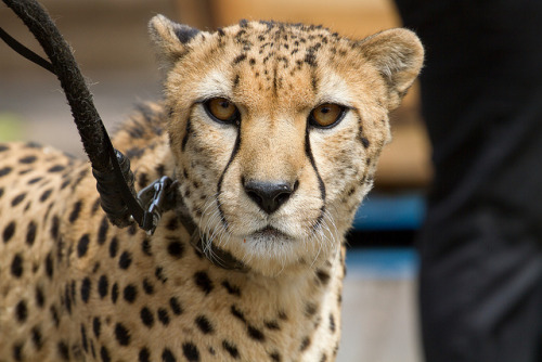 sdzoo:  San Diego Zoo, March 2012-023.jpg by theokaluza on Flickr.