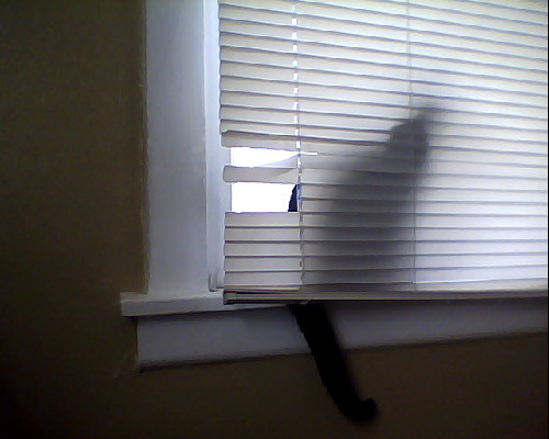 -.- I wonder where Chester is hiding …..  My poor blinds.