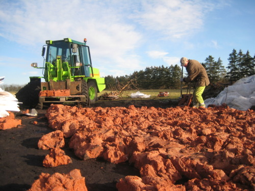Bente Skjøttgaard: The stones are put down at the ancient road Hærvejen, close to the village of Bække in Central Jutland, November 2010
